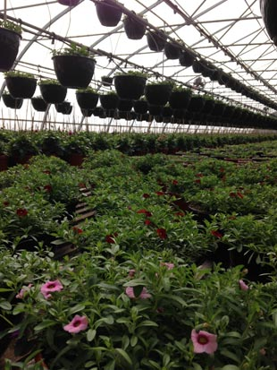Desert Hills Ranch Greenhouse